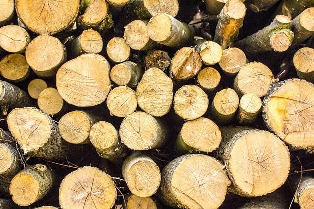 Бесплатный лес от государства на строительство дома: кому положен и как получить?